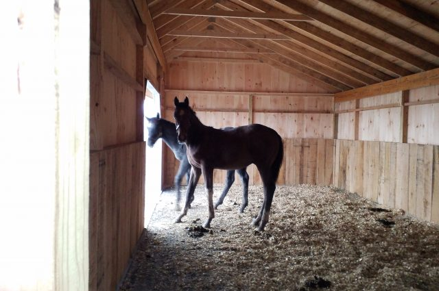 barn horse stall