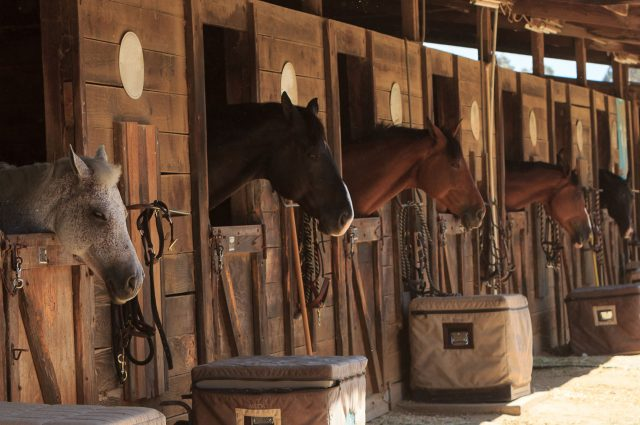 Small Horse Barns: Great Designs & Pictures